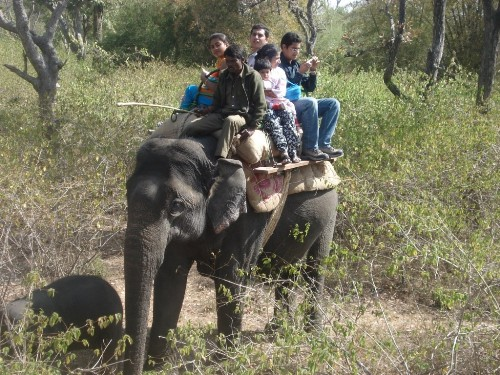 Elephant Safari Dhikala